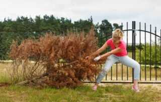 How to Remove Bushes & Trees Near Your Home - removing a tree