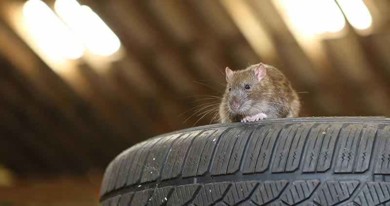 Ways to Keep Pests Out of Your Garage | Handyman tips