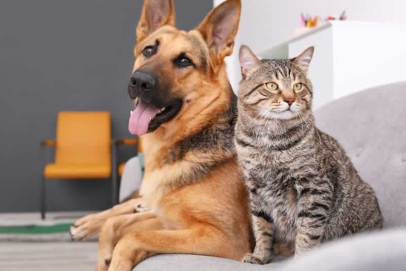 5 Home Improvement Projects for Pet Owners - dog and cat