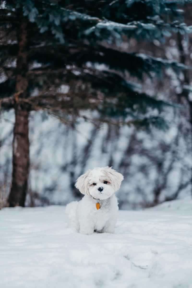 5 Tips for Furniture Removal in the winters - pet