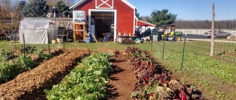 6 Tips For Getting Started in Farming - small farm