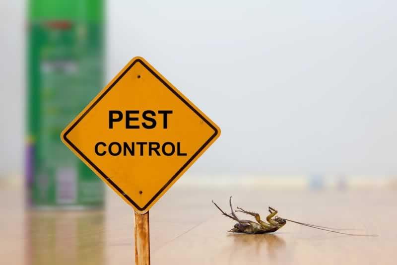 Effective Pest Control Methods