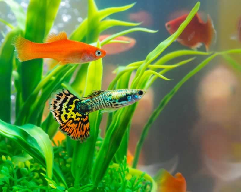 Freshwater Fish - freshwater aquarium