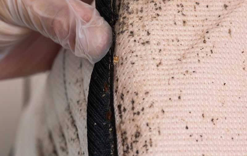 Should You Throw Out Your Mattress After A Bed Bug Infestation