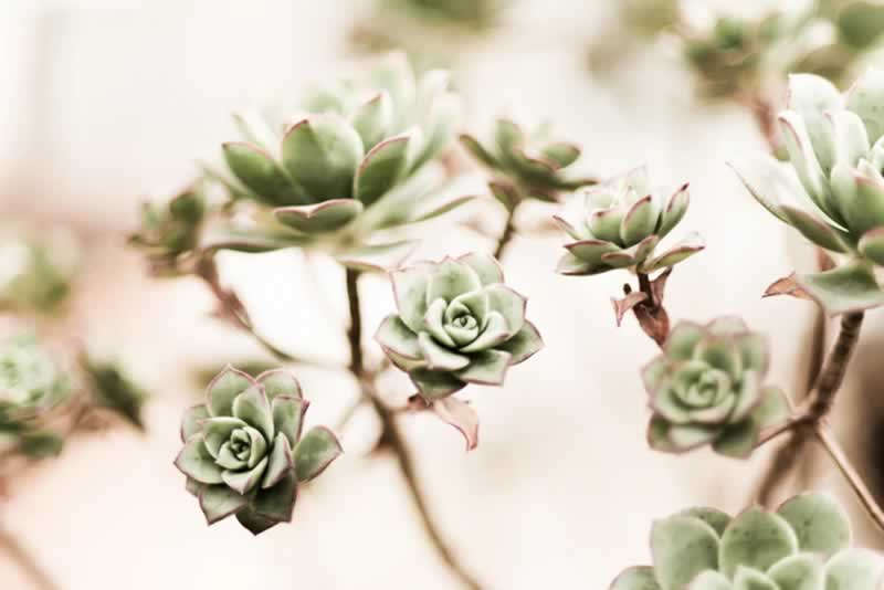 The Ultimate Guide to Refresh Your Home - plants
