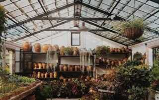 Tips for Creating the Perfect Greenhouse