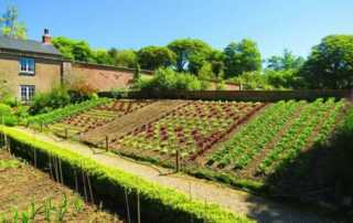 10 Simple Gardening Tips that you can Rely on