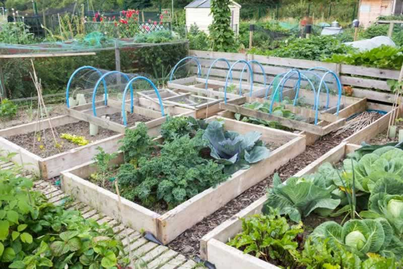 10 Simple Gardening Tips that you can Rely on - rasied beds