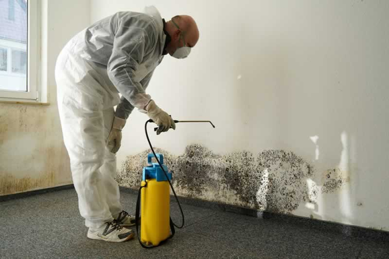 4 Reasons Quick Water Damage Restoration Response Is Important - mold