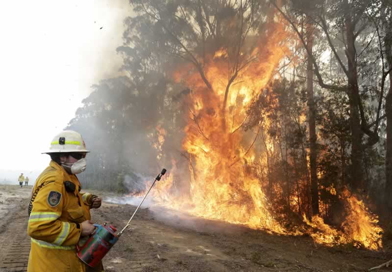 6 Essential Things You Need If You Live in High-Risk Wildfire Areas - wildlife fire