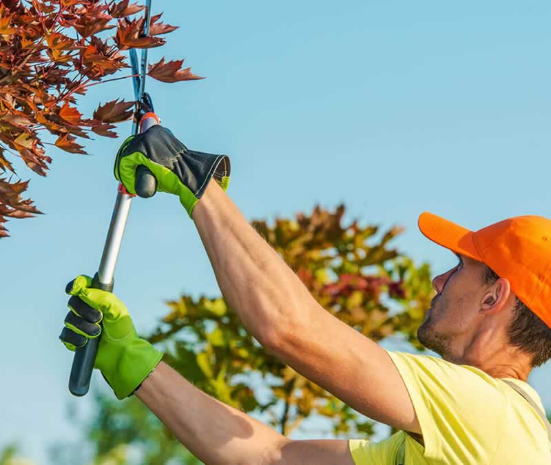 A Homeowner's Guide to Professional Tree Services