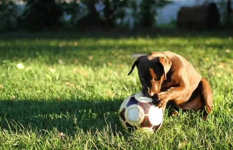 Creating a Backyard Oasis for Your Dog This Summer - dog with ball