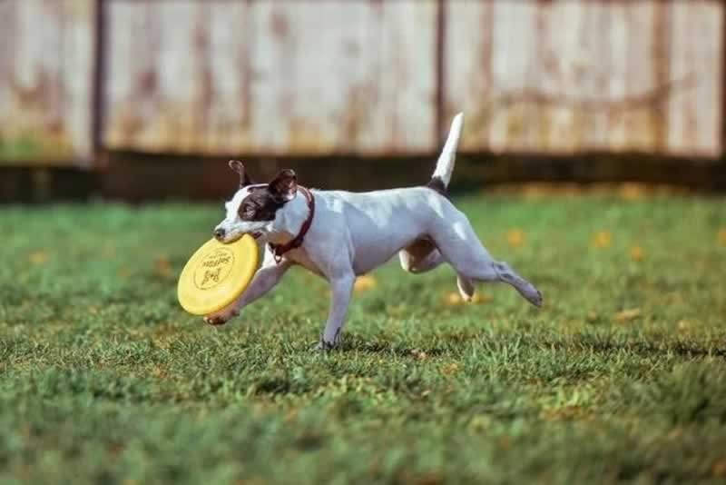 Creating a Backyard Oasis for Your Dog This Summer