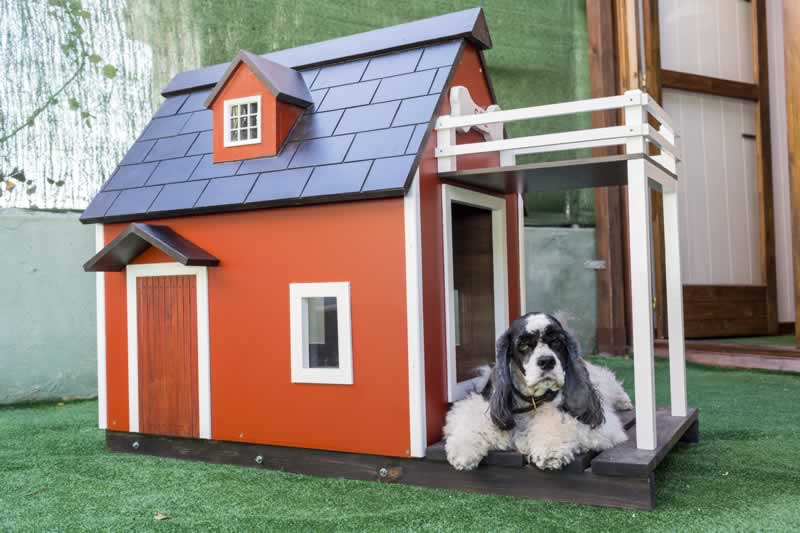How to Build a House for Your Pet