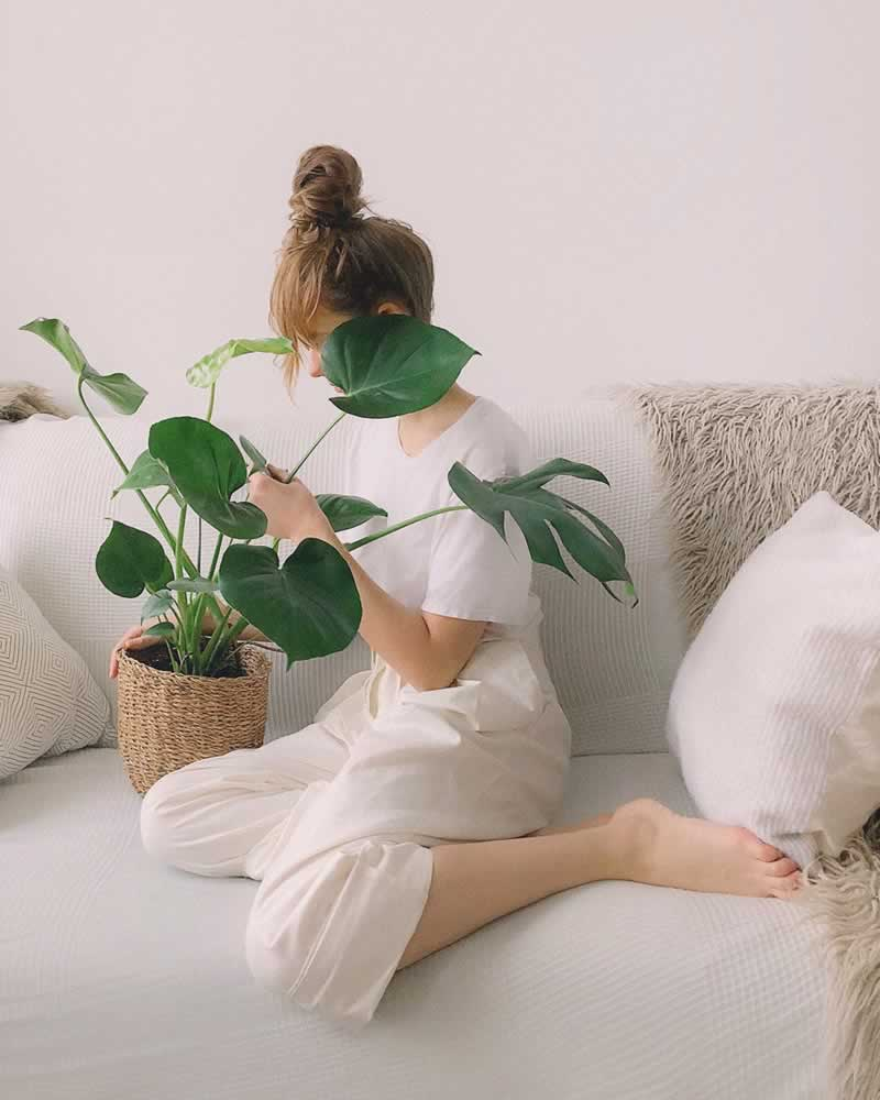 Refurnish Your Interior With Plants Using Those 6 Gorgeous Indoor Ideas - plant