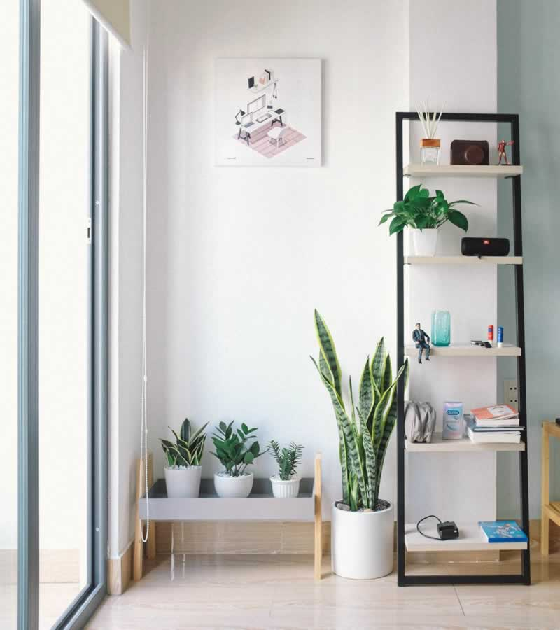 Refurnish Your Interior With Plants Using Those 6 Gorgeous Indoor Ideas