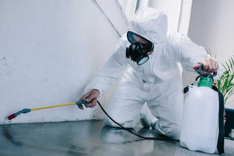 When Is It Time to Get Pest Control - spraying