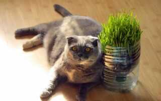 8 Tips for Cat-Friendly Home Decorating - indoor plants