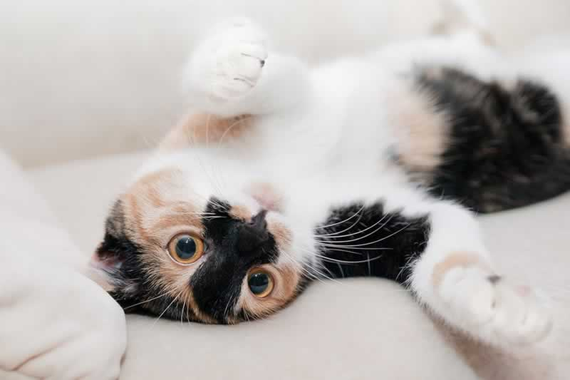 8 Tips for Cat-Friendly Home Decorating