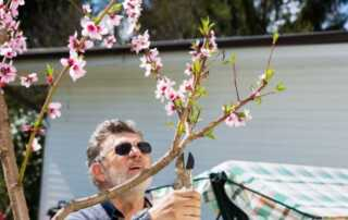 Beginners Guide to Pruning Peach Trees