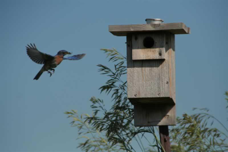 Build your own bird habitat - bird habitat