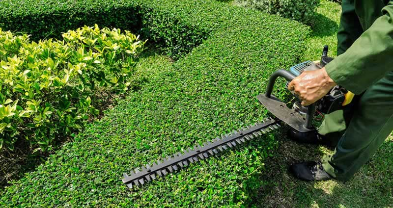DIY Hedge Trimming At Its Very Best