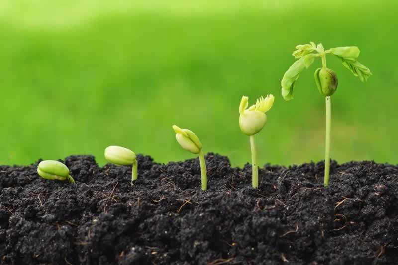 Delving Into Farming - plants
