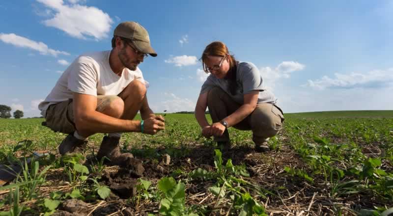 Delving Into Farming
