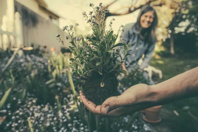 Great Ideas To Completely Transform Your Garden This Spring