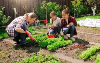 How To Choose The Best Garden Tools