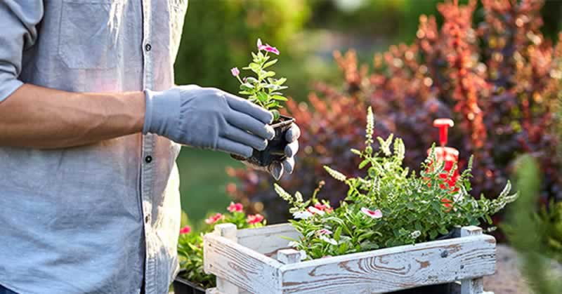 How To Choose The Best Garden Tools - planting