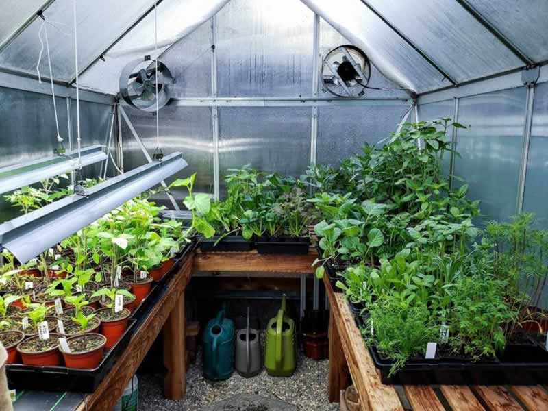How to Find Suitable Greenhouse Benches