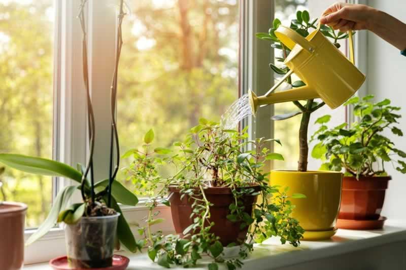 """Is Indoor Gardening """"Just Another Hobby"""""""