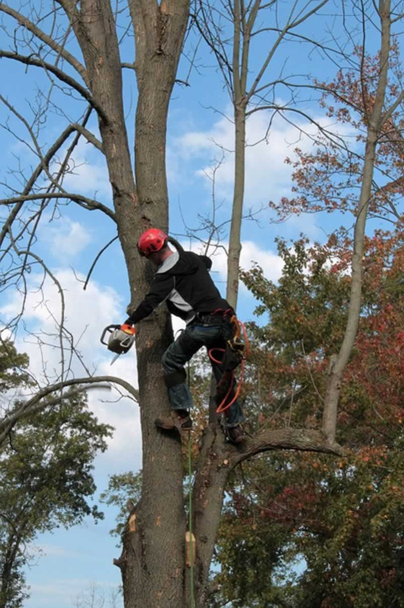 Latest Sustainable Innovations In Tree Service Industry - tree trimming