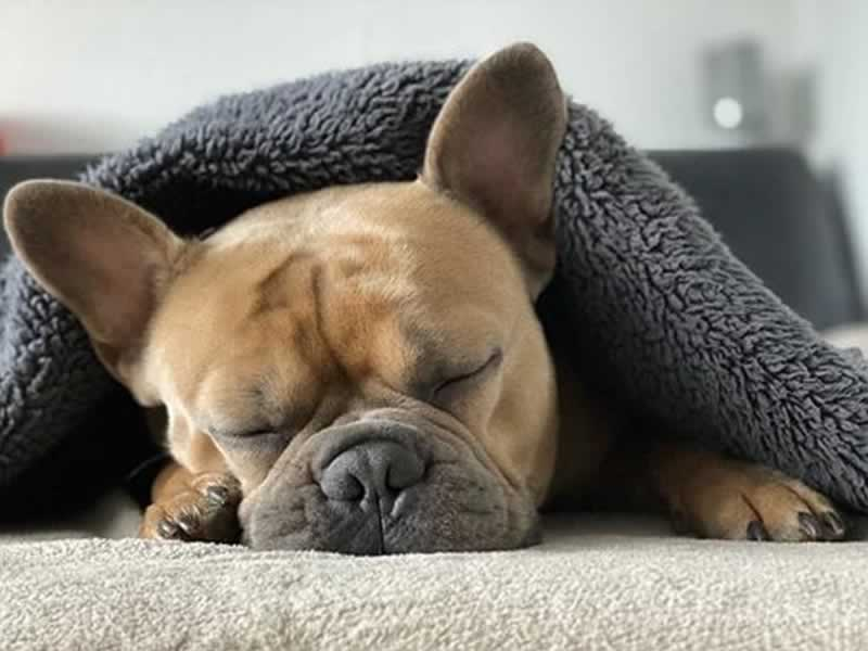 Perfect Sleeping Solutions for You and Your Pet - pet