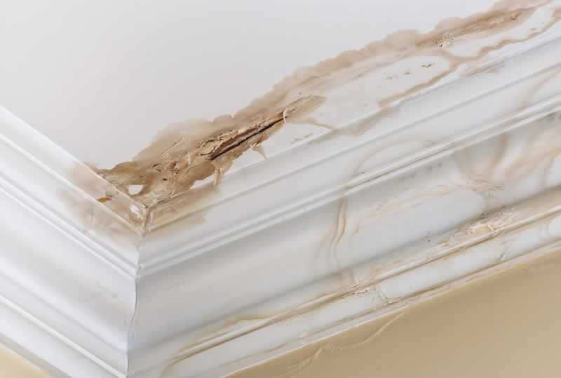 What to Do When You Find Water Damage