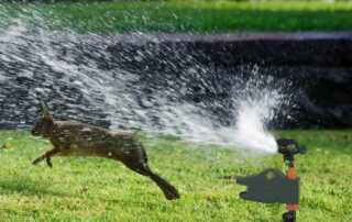 5 Tips To Purchasing The Best Motion Activated Sprinkler - rabbit