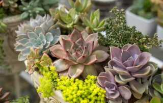 A buying guide on succulent plants - plants