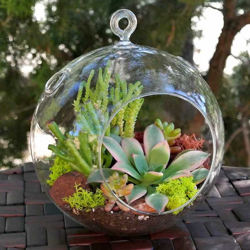 A buying guide on succulent plants