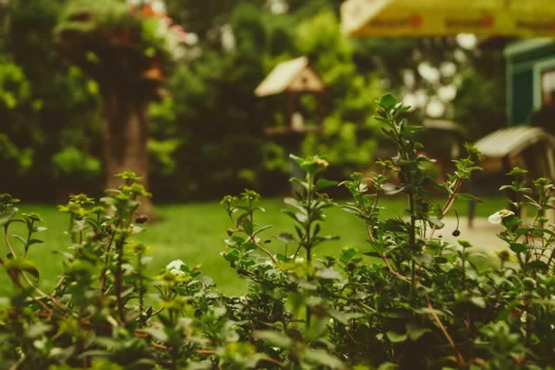 Amazing Backyard Amenities That Might Interest You