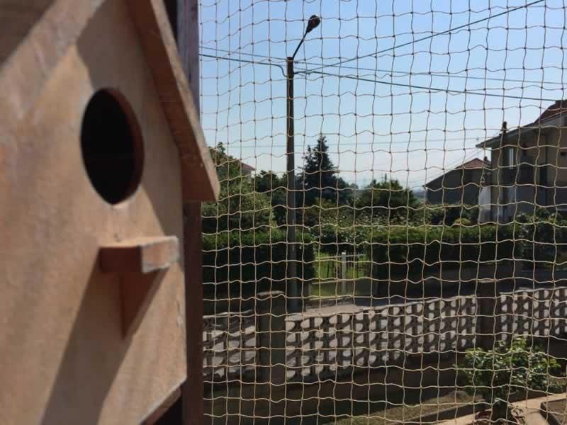 Anti-Bird Netting vs Anti Bird Mesh - mesh