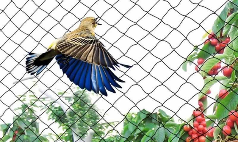Anti-Bird Netting vs Anti Bird Mesh