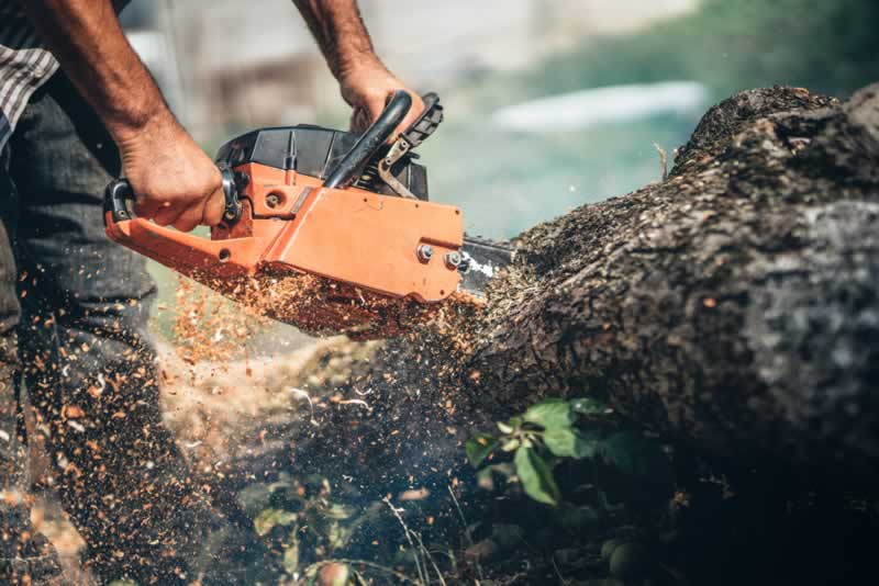 How To Clear Overgrown Land The Easy Way - chainsaw