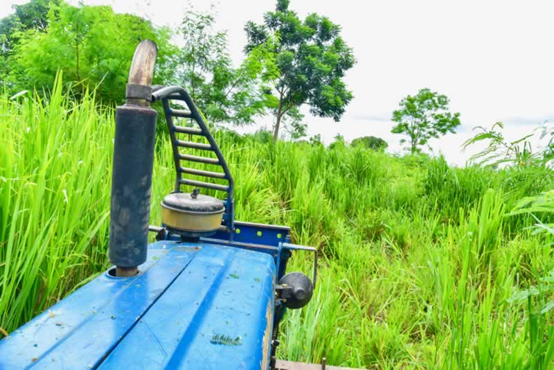 How To Clear Overgrown Land The Easy Way