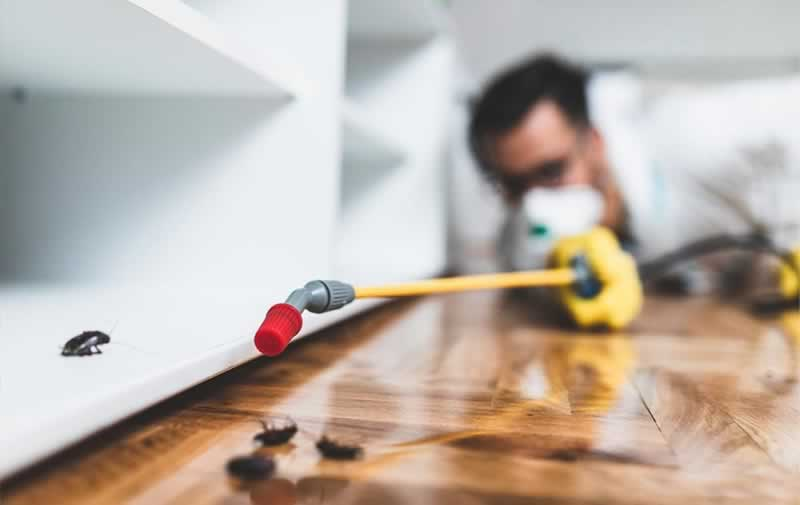 How To Detect And Get Rid Of Pests in Malaysia Homes - spraying