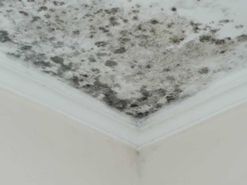 Learn How to Prevent Mold Growth Inside Your Home - mold on ceiling