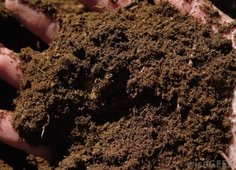 The 4 Things That You Didn't Know Your Garden Needed - peat moss