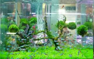 Top 4 Tips on How to Make a Self-Cleaning Aquarium - fishtank