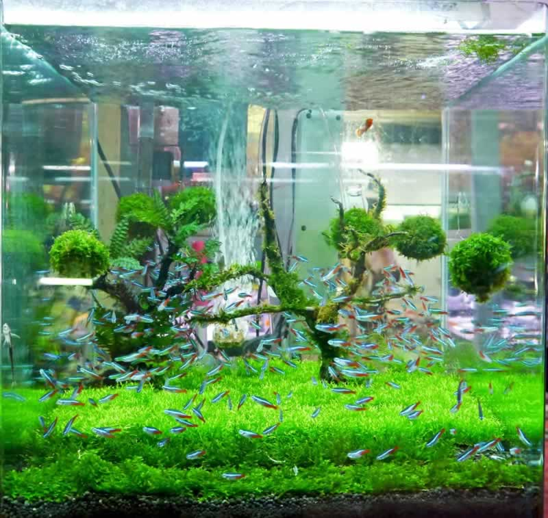 A legjobb 4 tipp az öntisztító akvárium elkészítéséhez - haltartály
