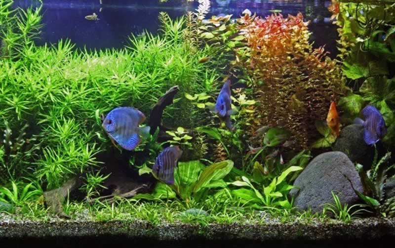 Top 4 Tips on How to Make a Self-Cleaning Aquarium